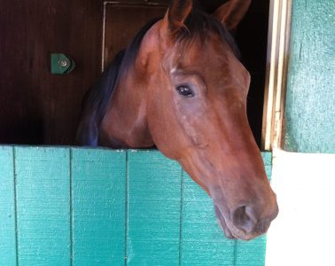 Buck - adopted OTTB from Neigh Savers Foundation.