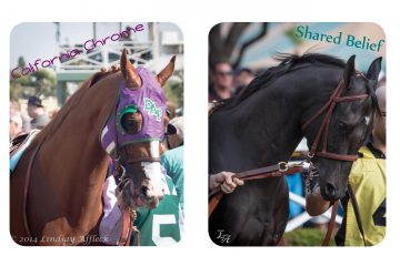 Shared Belief and California Chrome - Photos courtesy of ©Lindsay Affleck.