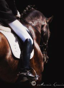 Marcie Lewis Photography horse portraits. Dressage.