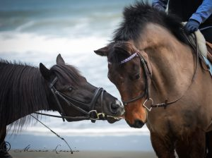Marcie Lewis Photography horse and rider portraits. Horse licking another horses nose.