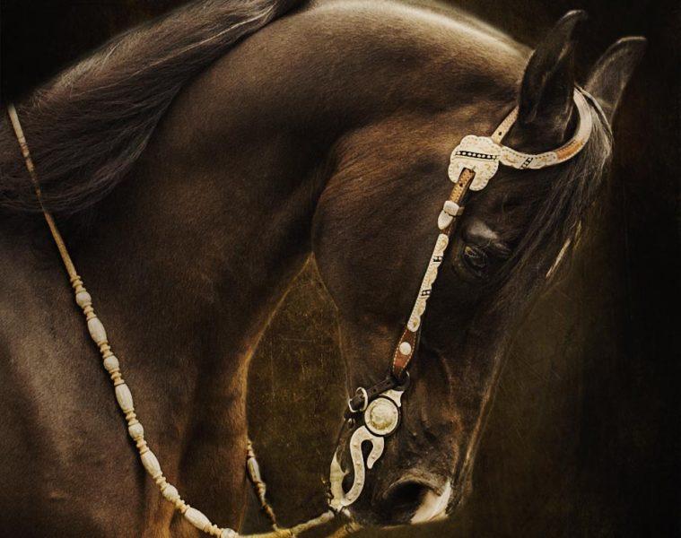 Marcie Lewis Photography western horse portrait.