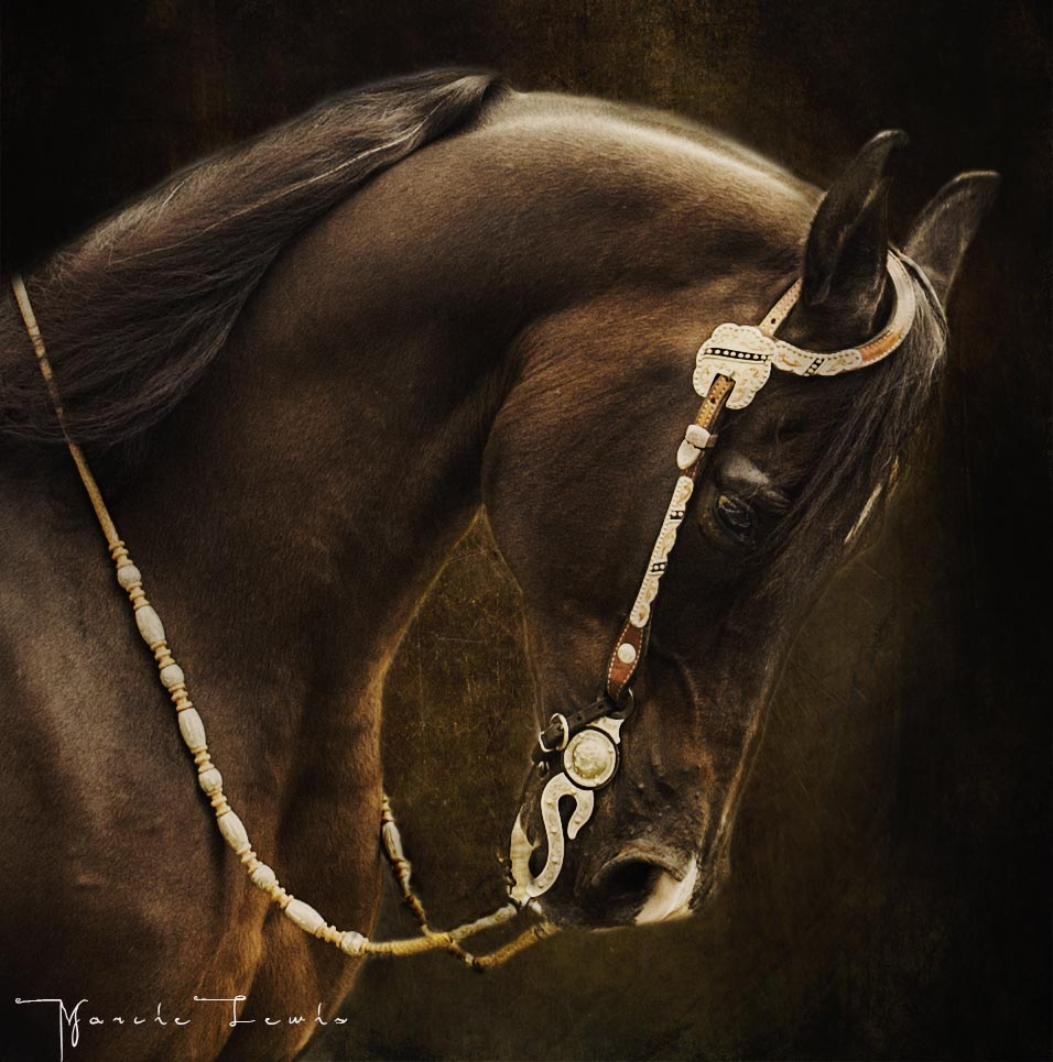 Marcie Lewis Photography western horse portrait.