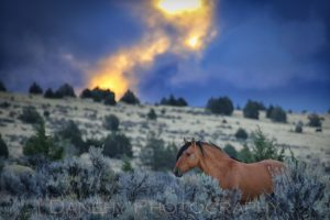 Danehy Photography Stallion at Sunrise