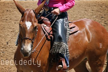 Western States Horse Expo 2015