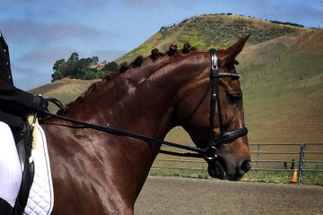 Equus Mega-Tek Rebuilder Review