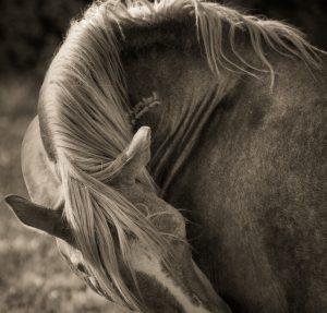 Bev Pettit Photography Spotlight