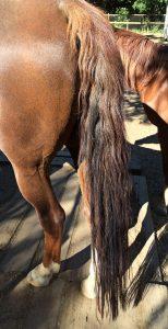 Mainly Long Hair Detangler