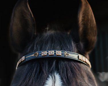 Equus Couture Spotlight
