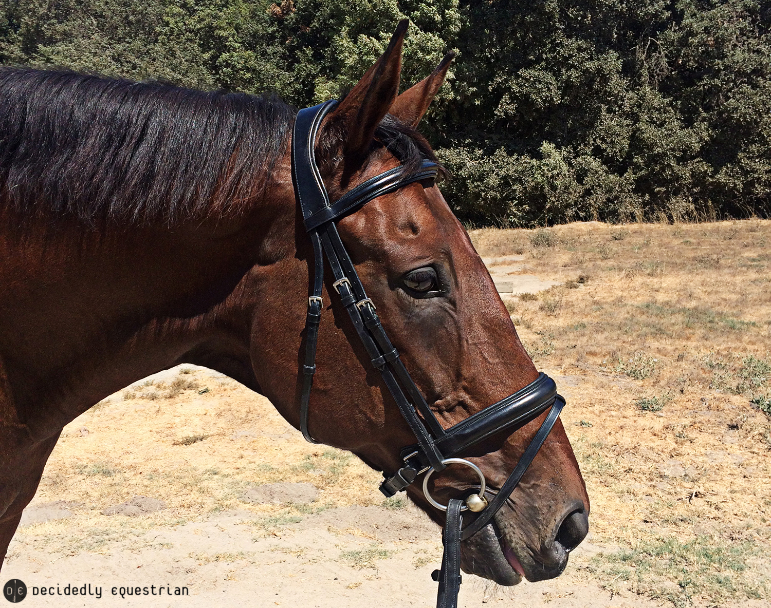 Lund Saddlery Dressage Bridle and Reins Review