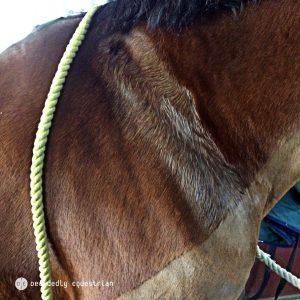 Corona Veterinary Liniment Review