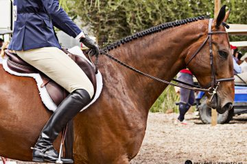 Giant Steps Charity Horse Show 2017