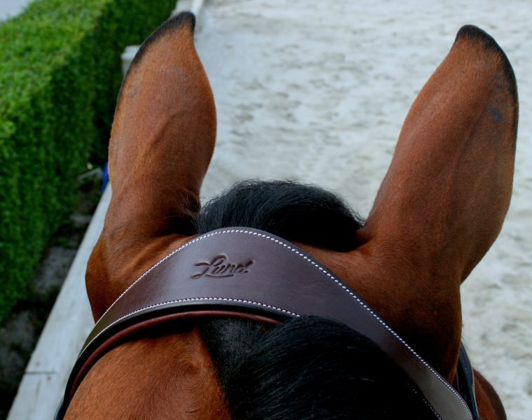 Lund Saddlery Company Spotlight