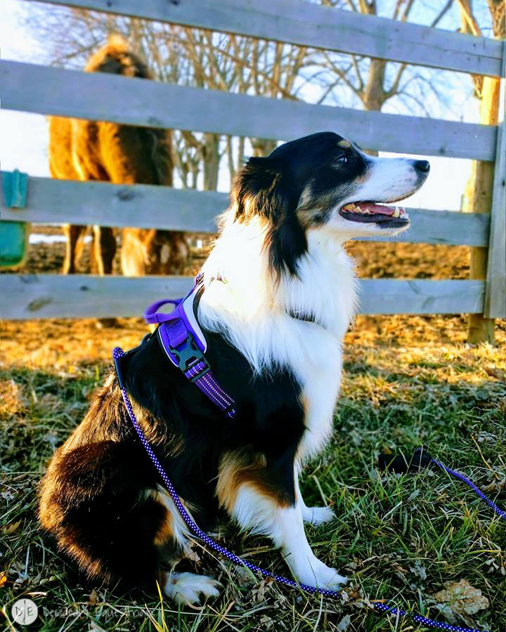Hurtta Active Harness Review