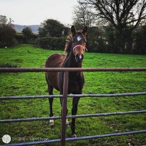 Finding Horses While Traveling - Ireland