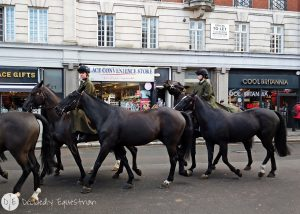 Finding Horses While Traveling - London - Royal Mews