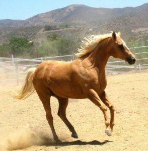 Knotty Horse Spotlight