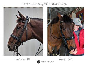 Knotty Horse Detangler Review Forelock