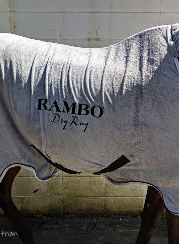 Horseware Rambo Dry Rug Review