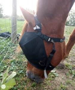 Equivzor Fly Protection from Protective Pet Solutions Review