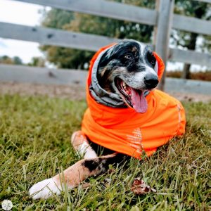 Keep your Active Dog Cozy with the Extreme Warmer from Hurtta North America