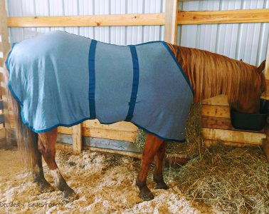 Draper Therapies Equine Anti Sweat Sheet Review
