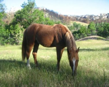 Horses and the Law Sales Contract