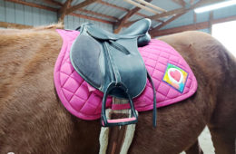 Laughing Mare AP Saddle Pad Review