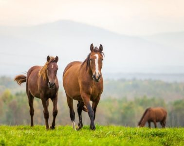 Equine Law Explained