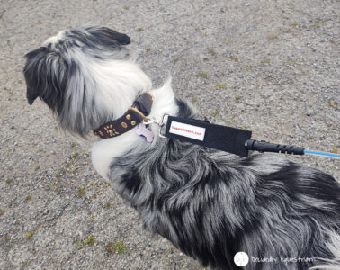 Coastal Hound Leash Review