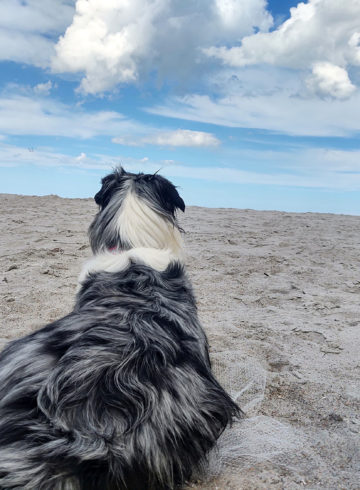 "Canine ""Roadtrip"" Summer 2020 - What we used"