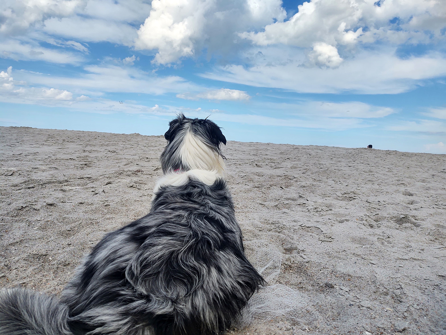 """Canine """"Roadtrip"""" Summer 2020 - What we used"""