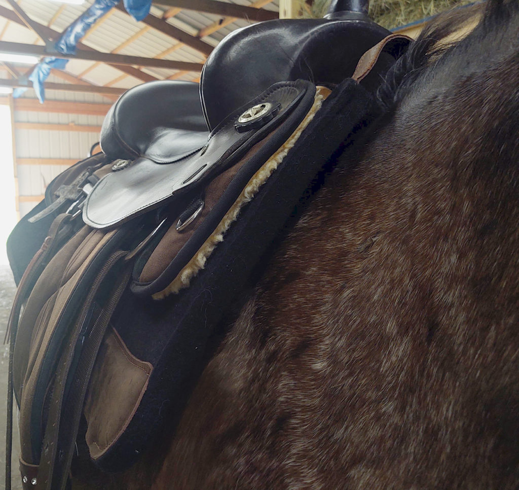 Total Saddle Fit Perfect Saddle Pad Review