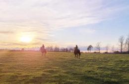 Guest Post: Horses of the Ozark Hills