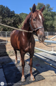 Lucky Horse Shampoo Bar Review